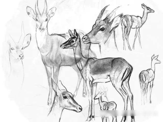 美洲豹猫,大象,长尾鹦鹉和朱鹮等动物的绘画创作